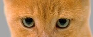 القط مشمش