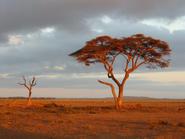 Somalia_countryside