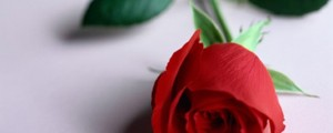rose-care-valentines-flowers